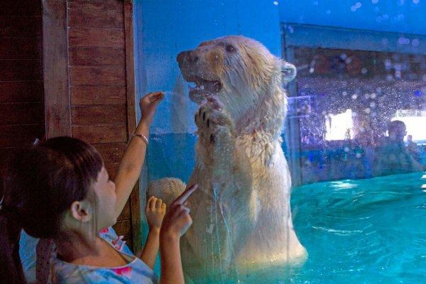 Cet ours n'a jamais vue la vraie glace!
