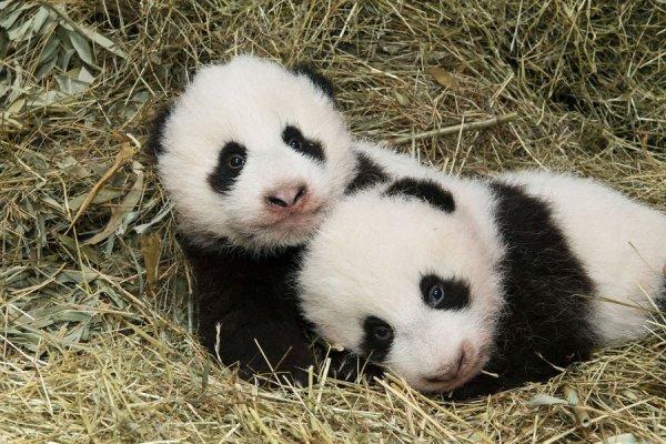 Les jumeaux!^^