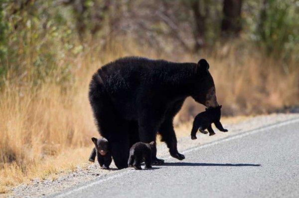 Cette brave oursonne assure!^^