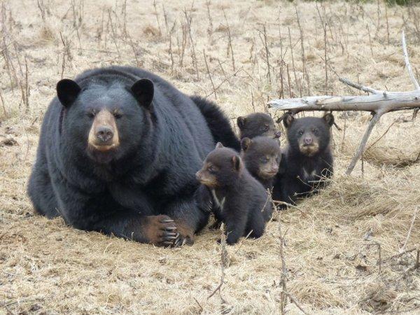 Merveilleuse maman avec ses petits^^