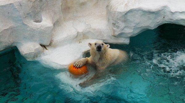 C'est mon ballon!:o