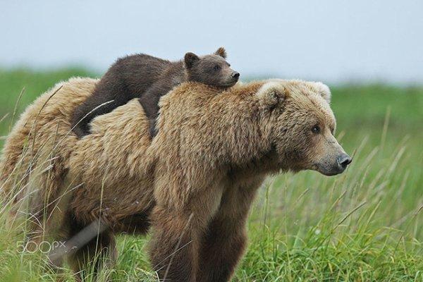 A dada sur le dos de maman^^