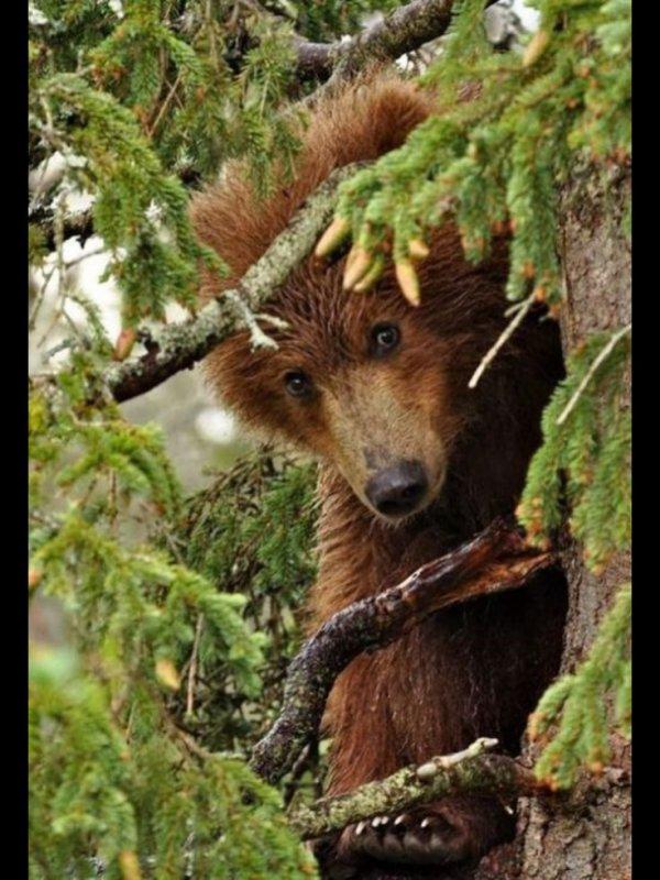 Coucou Amies et Amis des ours!^^
