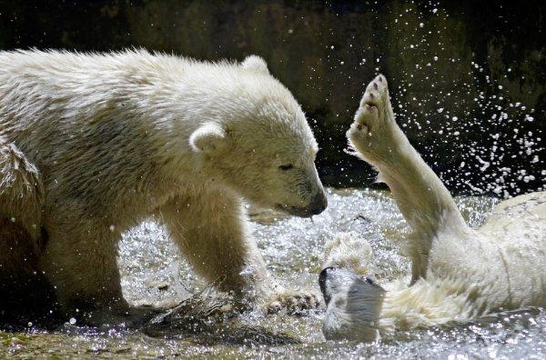 Les enfants Ours jouent!^^