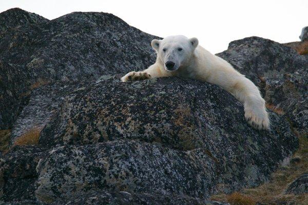 Oui! Je suis un ours de glace me dit-on!^^