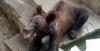 Les images de cet ours affamé en chine font le tour du monde!