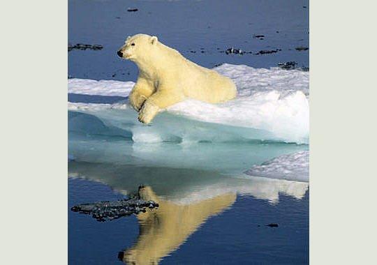 Un Ours qui surf sur un rythme infernal!^^