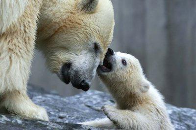 Je t'adore mon petit et je te protégerai totalement!^^