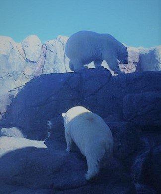 En plus de son absolue amour avec Pelusa, Arturo était pote avec cet ours qui est de dos!^^