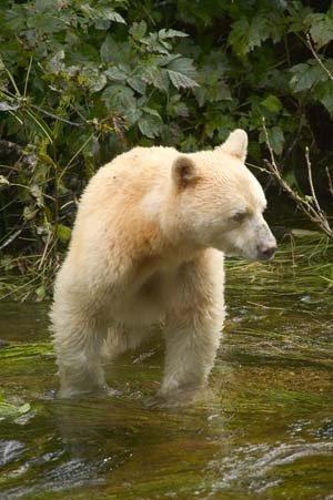 Contrairement à l'apparence, je ne suis pas vraiment un ours polaire!^^