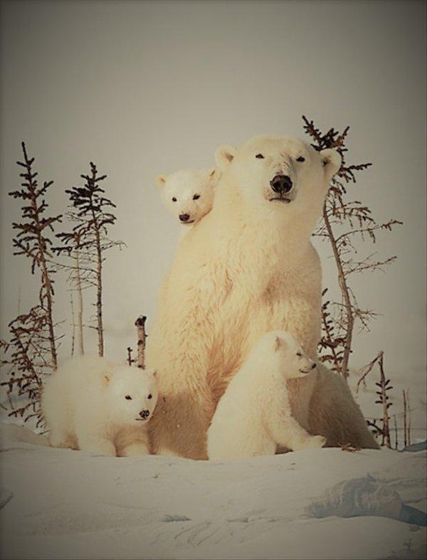 Une magnifique famille...^^