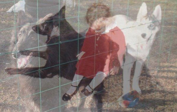 Mes chiens Champion Oasis et Eclair avec Margaux