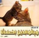 Photo de muslima-35