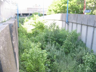 Ici la tranchée debouchant du tunnel, vers la gare,( la vegetation a recouvert les rails et le ballast !)