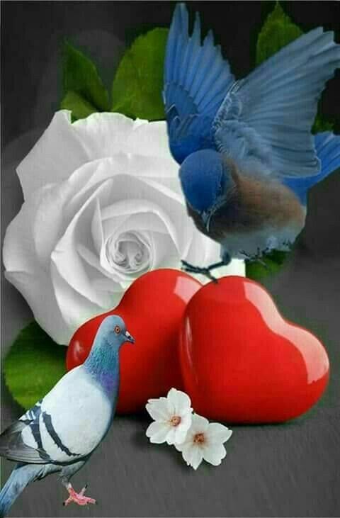 ...........Va ou ton coeur t'emporte...........