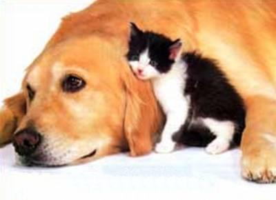 Chien chat les chevaux - Photo de chien et chat mignon ...