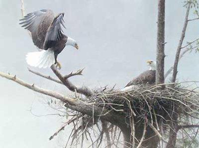 Petit à Petit l'oiseau quitte son nid