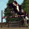 Dae-s-Horses