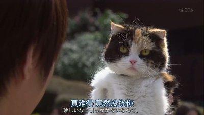 Un chat, un Arashi, un drama parfait