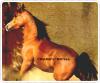 Conc0urs-Horses