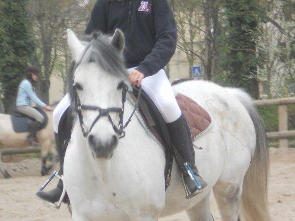 Tu est le poney de mes reves ♥
