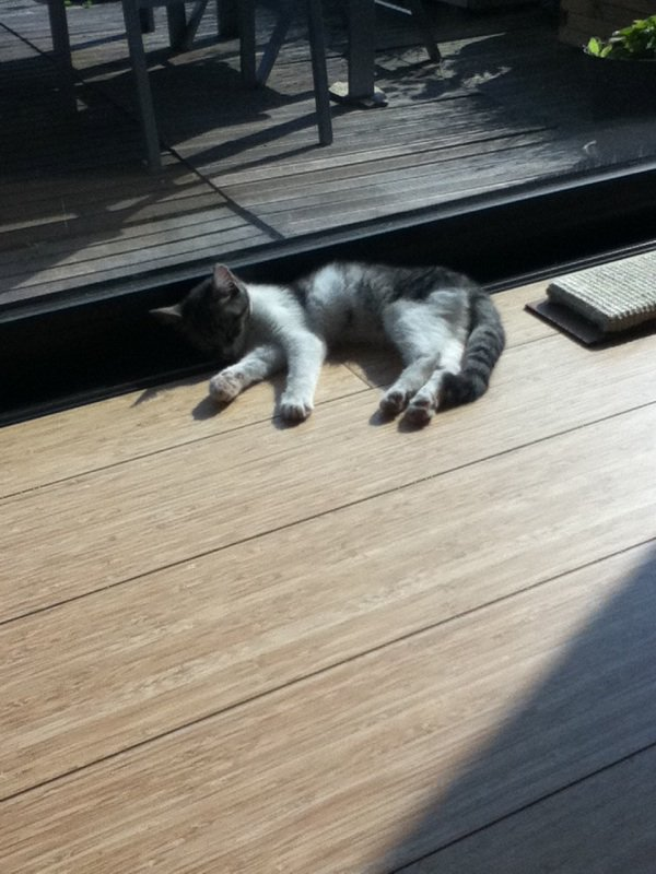 Mon nouveau chat !