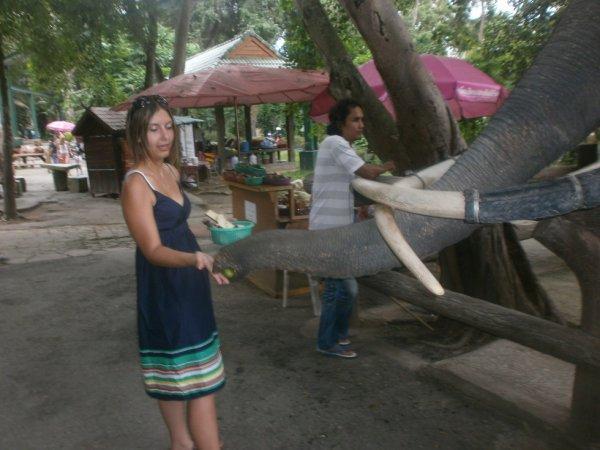 moi avec un elephant de thailande