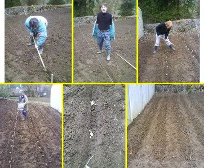 Les pommes de terre le jardin de proisy - Quand planter pomme de terre ...