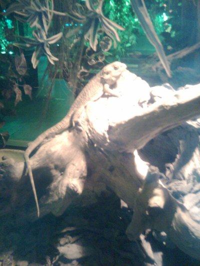 Exposition de réptiles longwy le 15/11/11
