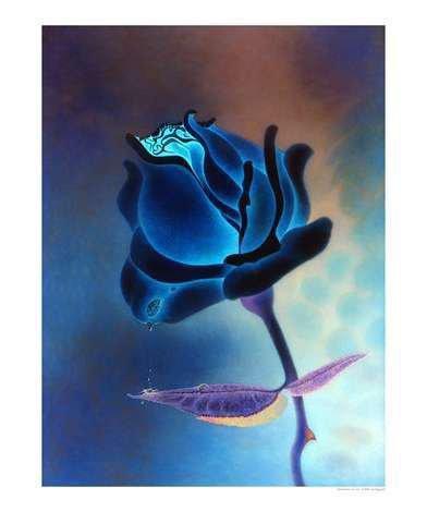 Une rose bleu