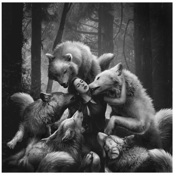 Pour Buzz...Une tendre pensée pour toi....Gros gros bisous....Avoue je suis sure que tu aimerais être à la place de cette jeune femme toi qui adore les loups....
