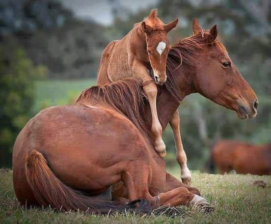 Passionnée de chevaux 💛💜💚