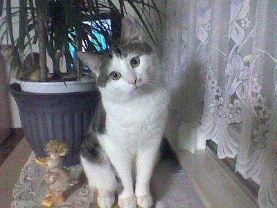 mon ami le chat
