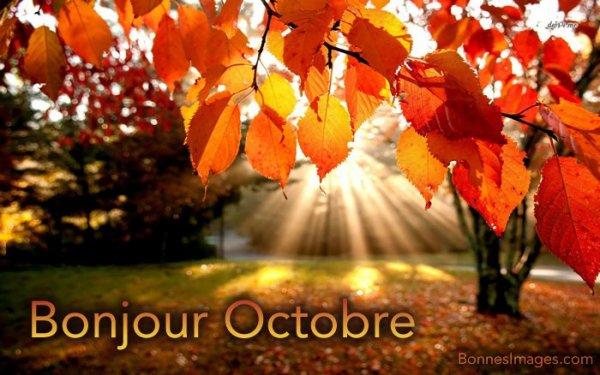 Je vous souhaite un excellent dimanche d'octobre