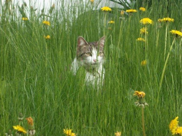 Minou le jeudi de l'ascension dans la pelouse.
