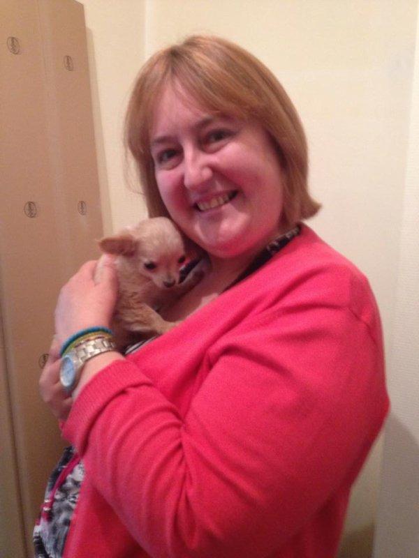 Je vous présente Mimmo le Chihuahua  de ma fille- dimanche 27 avril 2014.