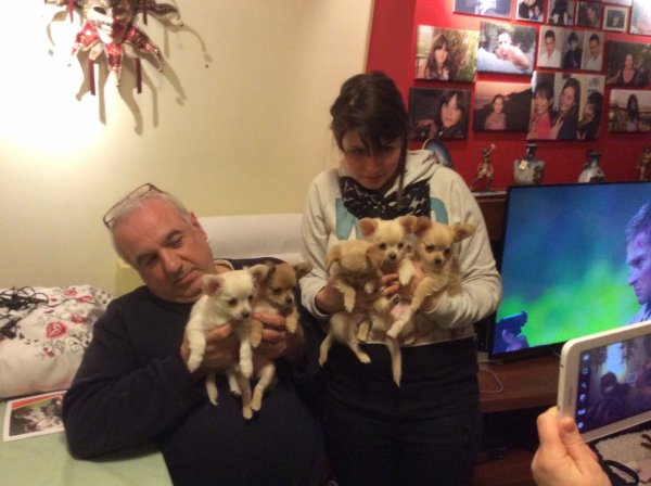 Bienvenue aux cinq chiots de Mimmo dont Fudji le 25 mars 2015