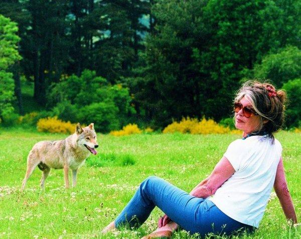 Nicolas Hulot a autorisé l'abattage de 40 loups...
