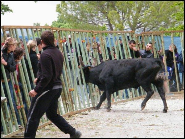 Fête de printemps de Langlade 2012