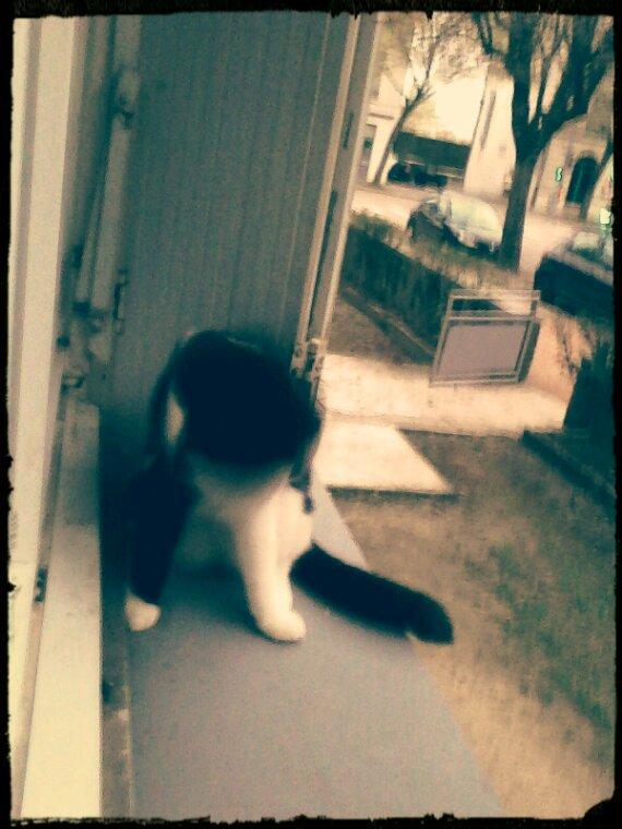 Minou mon cat