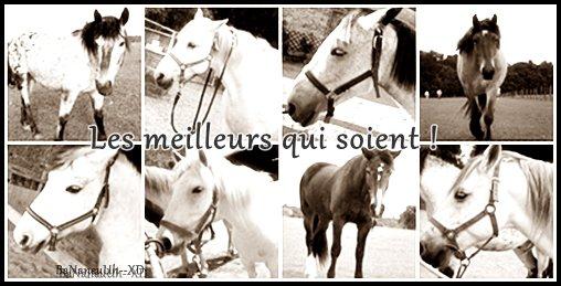Les chevaux à Montigny ♥
