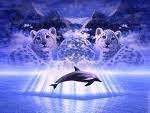 moi et les dauphin c'est mon ame seur