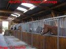 Photo de Horse--LoOve