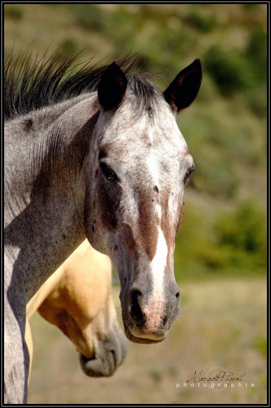 Il vaut mieux se fier à un cheval sans bride qu'à un discours sans ordre. Théophraste