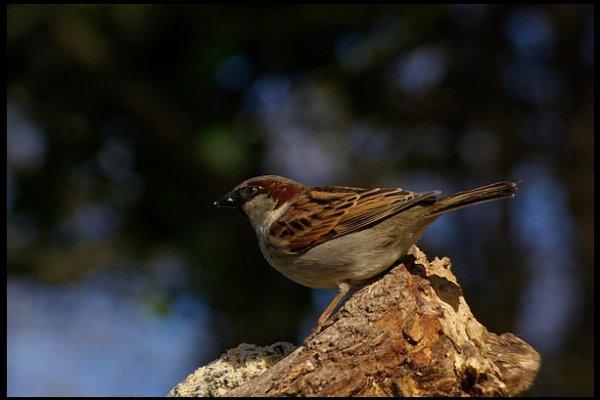 Chaque oiseau vole avec les oiseaux de son espèce. Mahomet