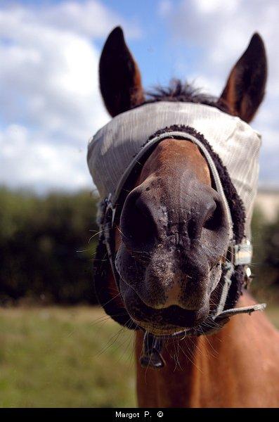 Après 60 minutes d'équitation, l'homme dit qu'il a fait une heure de cheval, le cheval, lui, doit se dire qu'il a fait une heure d'homme.Philippe Geluck