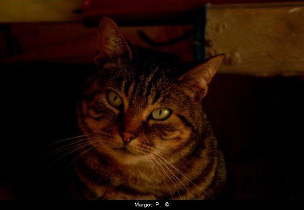 La principale différence entre un chat et un mensonge, c'est que le chat n'a que neuf vies. Mark Twain