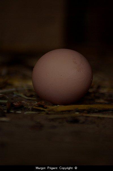 Une poule est seulement la façon d'un oeuf de faire un autre oeuf. Samuel Butler
