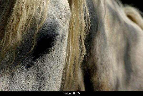 L'homme est la plus piètre conquête du cheval. Jules Feller