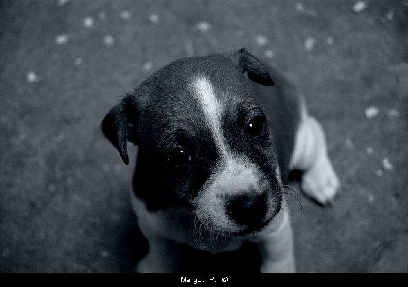 L'homme est le seul animal qui rougisse ; c'est d'ailleurs le seul animal qui ait à rougir de quelque chose. George Bernard Shaw